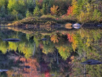 https://imgc.artprintimages.com/img/print/shoreline-reflection-lily-pond-white-mountain-national-forest-new-hampshire-usa_u-l-pdkuzt0.jpg?p=0