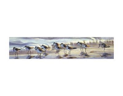 Shoreline Sanderlings-Matthew Hillier-Art Print