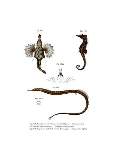 Short Dragonfish--Giclee Print
