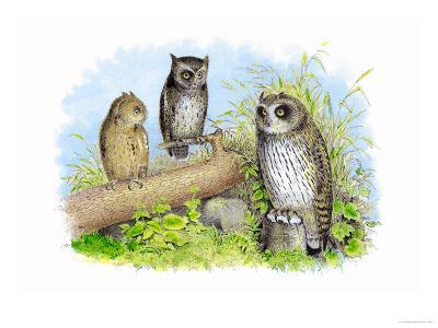 Short-Eared Owl and Screech Owl-Theodore Jasper-Art Print