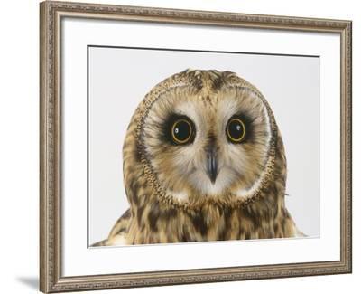 Short-Eared Owl, Asio Flammeus-Les Stocker-Framed Photographic Print