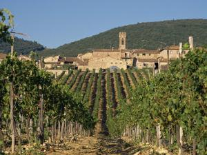 Vineyard in the Chianti Classico Region North of Siena, Tuscany, Italy, Europe by Short Michael