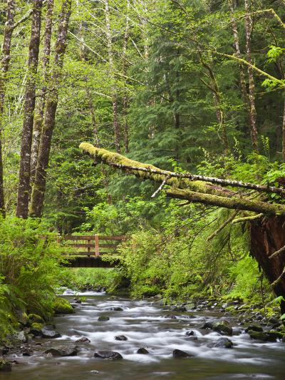 Short Sand Creek, Oswald West State Park, Oregon, USA-Jamie & Judy Wild-Photographic Print