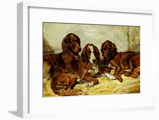 Shot and His Friends - Three Irish Red and White Setters, 1876-John Emms-Framed Giclee Print