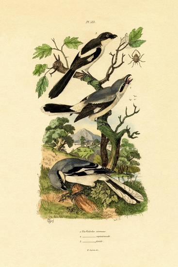 Shrikes, 1833-39--Giclee Print