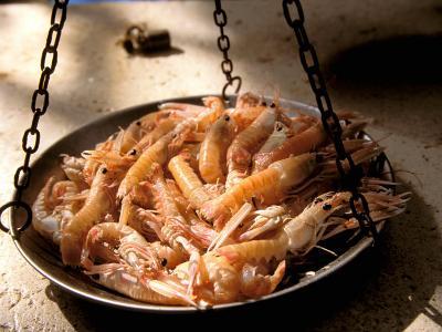 Shrimp at Open Fish Market, Sibenik, Croatia-Connie Bransilver-Photographic Print