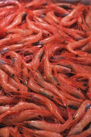 https://imgc.artprintimages.com/img/print/shrimp-at-tsukiji-fish-market-tokyo-honshu-island-japan-asia_u-l-pnggb40.jpg?p=0