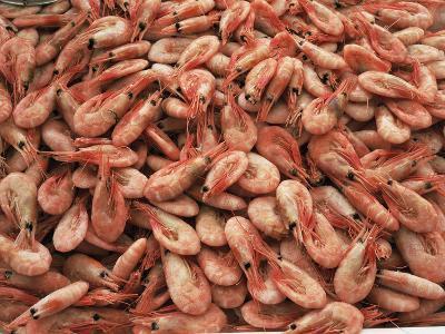Shrimp-Bjorn Svensson-Photographic Print