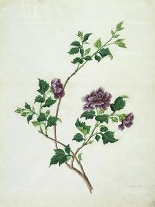 Shrubby Althaea , 19th Century
