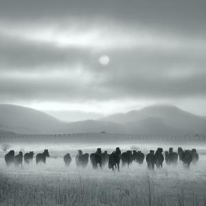 Toward the Sun by Shu-Guang Yang