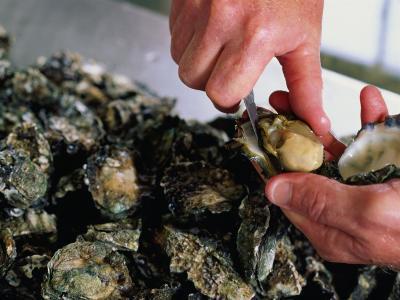 Shucking Oysters, Coffin Bay, Australia-John Hay-Photographic Print