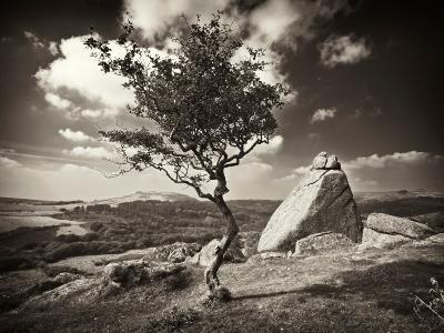 Shuffletags-David Baker-Photographic Print