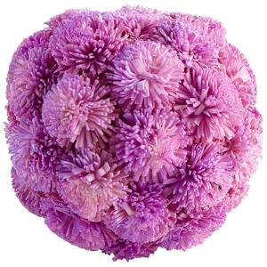 Sia Filler - Lavender