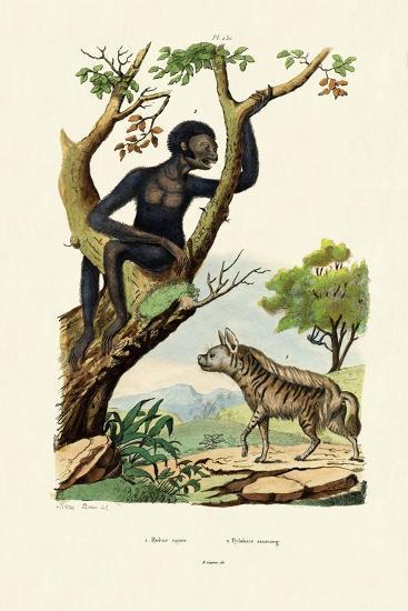 Siamang, 1833-39--Giclee Print