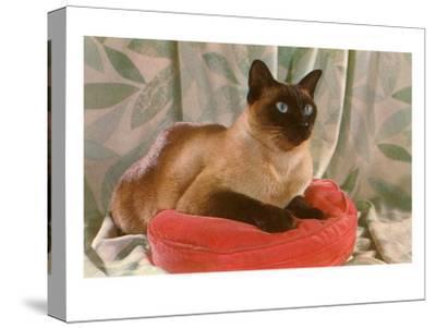Siamese Cat on Pillow