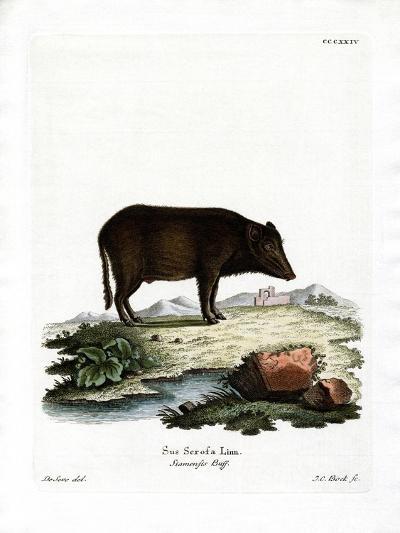 Siamese Wild Boar--Giclee Print