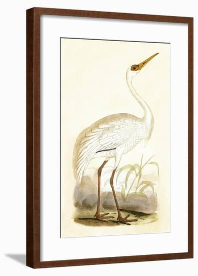 Siberian Crane,  from 'A History of the Birds of Europe Not Observed in the British Isles'-English-Framed Giclee Print
