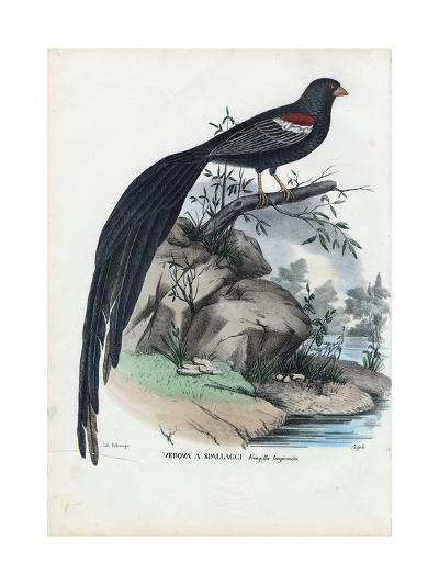 Siberian Finch, 1863-79-Raimundo Petraroja-Giclee Print