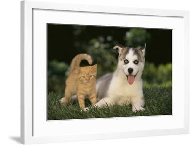 Siberian Husky Puppy and Kitten-DLILLC-Framed Photographic Print