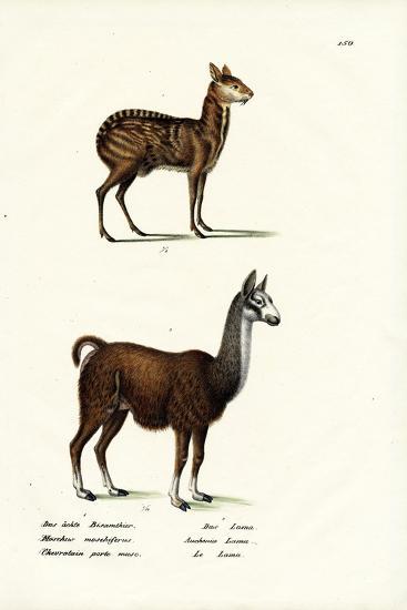 Siberian Musk Deer, 1824-Karl Joseph Brodtmann-Giclee Print