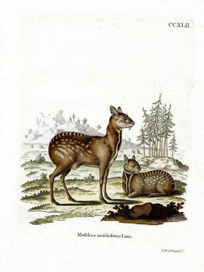 Siberian Musk Deer--Giclee Print