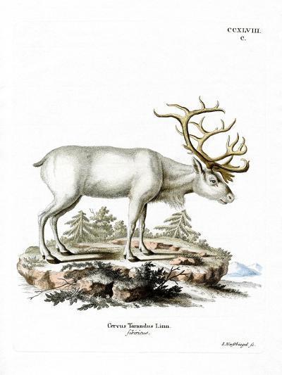 Siberian Reindeer--Giclee Print