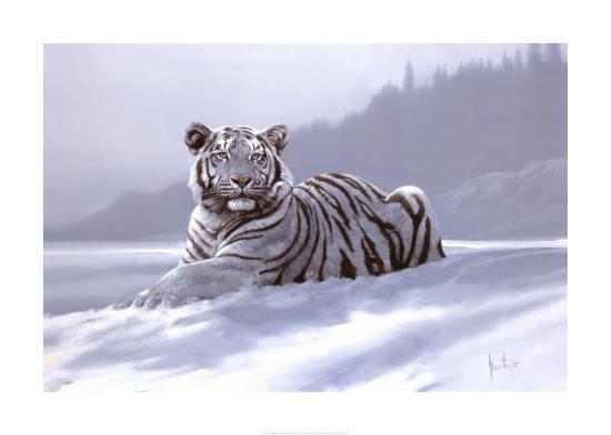 Siberian Tiger-Spencer Hodge-Art Print