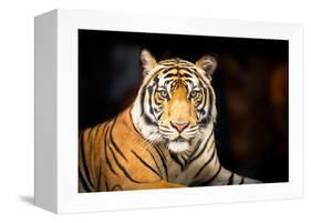 Siberian Tiger-fotoslaz-Framed Premier Image Canvas
