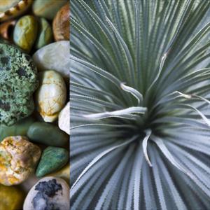 Desert Zen IV by Sidney Aver