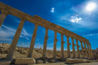 Columns of the Roman Ruins of Palmyra, Syria by siempreverde22