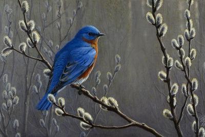 Signals of Spring - Eastern Bluebird-Wilhelm Goebel-Giclee Print
