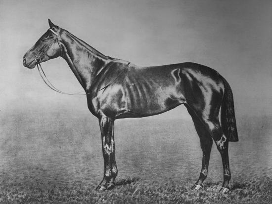 'Signorinetta', 1905-1928, (1911)-Unknown-Giclee Print