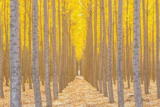 Silence Is Golden-Ross Lipson-Photographic Print