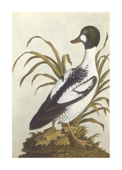 Silesian Birds I--Premium Giclee Print