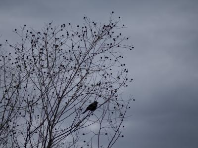 Silhouette of a Bird in a Tree Against a Cloudy Sky-Joel Sartore-Photographic Print