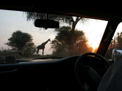 Silhouette of a Giraffe in the Tarangire National Park, Tarangire National Park, Tanzania, Africa-Gina Martin-Photographic Print