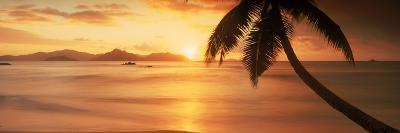 Silhouette of a Palm Tree on the Beach at Sunset, Anse Severe, La Digue Island, Seychelles--Photographic Print