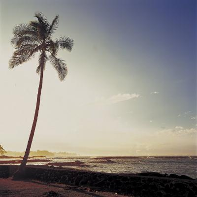 Silhouette of a Single Palm Tree on a Beach--Photographic Print