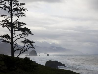 Silhouette of a Tree with the Rocky Oregon Coast in the Background-Michael Hanson-Photographic Print