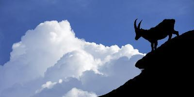 Silhouette of Alpine Ibex (Capra Ibex) Against Thunderstorm Clouds-Philippe Clement-Photographic Print