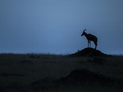 Silhouette Of An Antelope In Maasai Mara National Reserve-Andrew Coleman-Photographic Print