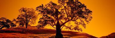 Silhouette of California Oaks Trees, Central Coast, California, USA--Photographic Print