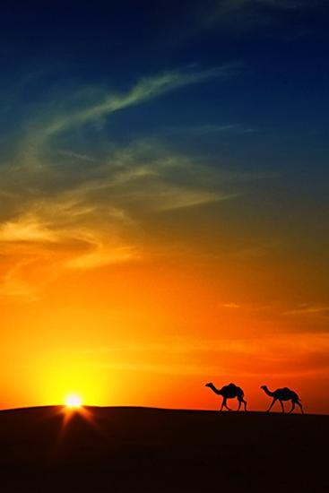 Silhouette of Camels at Sunset,Saudi Arabia-I hope you like my photos-Photographic Print