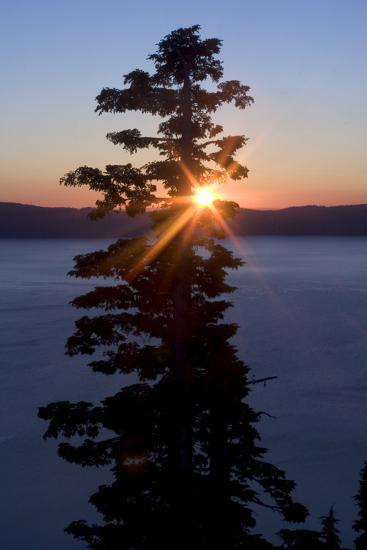 Silhouette of Coniferous Tree Near Crater Lake in Crater Lake National Park, Oregon-Philip Schermeister-Photographic Print