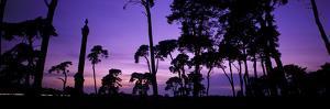 Silhouette of Elveden War Memorial and Scots Pines at Sunset, A11, Elveden, Suffolk, England