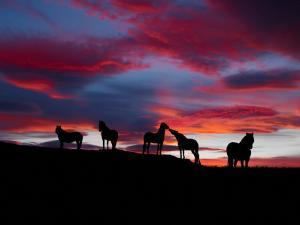 Silhouette of Horses at Night, Iceland