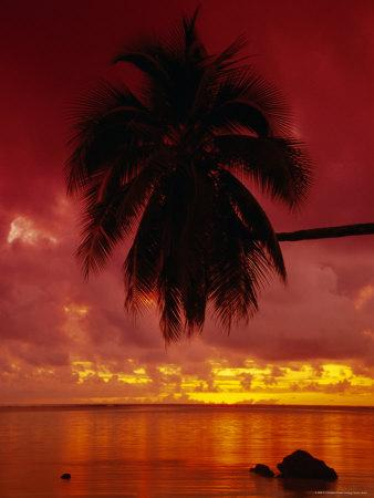 https://imgc.artprintimages.com/img/print/silhouette-of-overhanging-palm-tree-colourful-sunset-aitutaki-cook-islands-polynesia_u-l-p2l6xg0.jpg?p=0