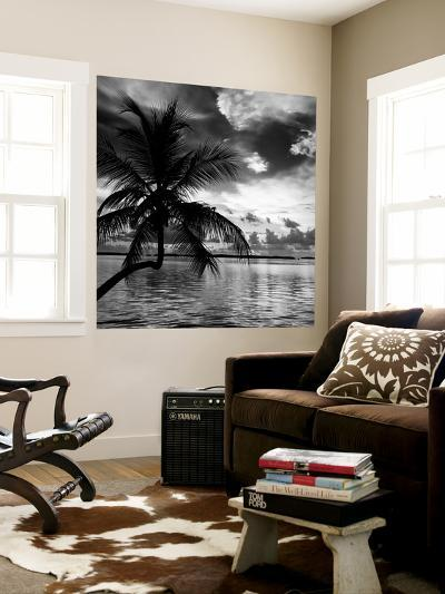 Silhouette of Palm Tree at Sunset-Philippe Hugonnard-Wall Mural