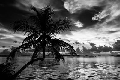 Silhouette of Palm Tree at Sunset-Philippe Hugonnard-Photographic Print