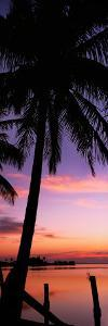 Silhouette of Palm Trees at Dawn, Pine Island, Lee County, Florida, USA
